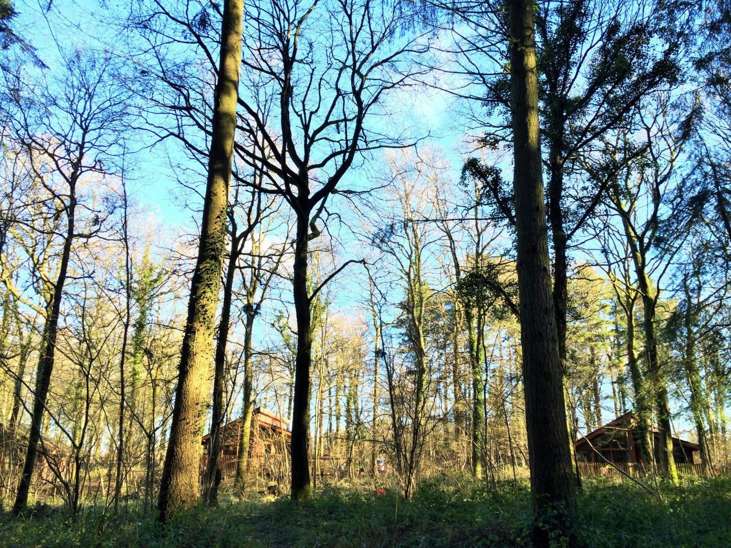 Forest Holidays lodges