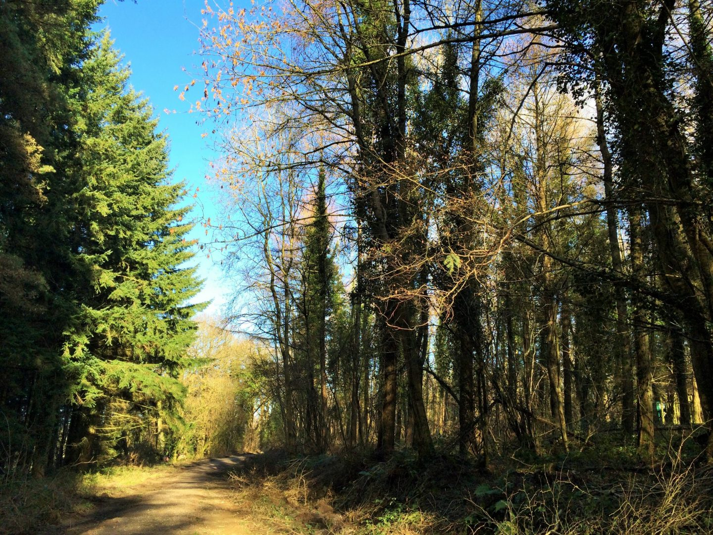 Walking trails at Forest Holidays