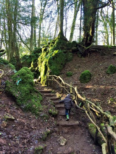 Puzzlewood, Holidays in the Forest of Dean