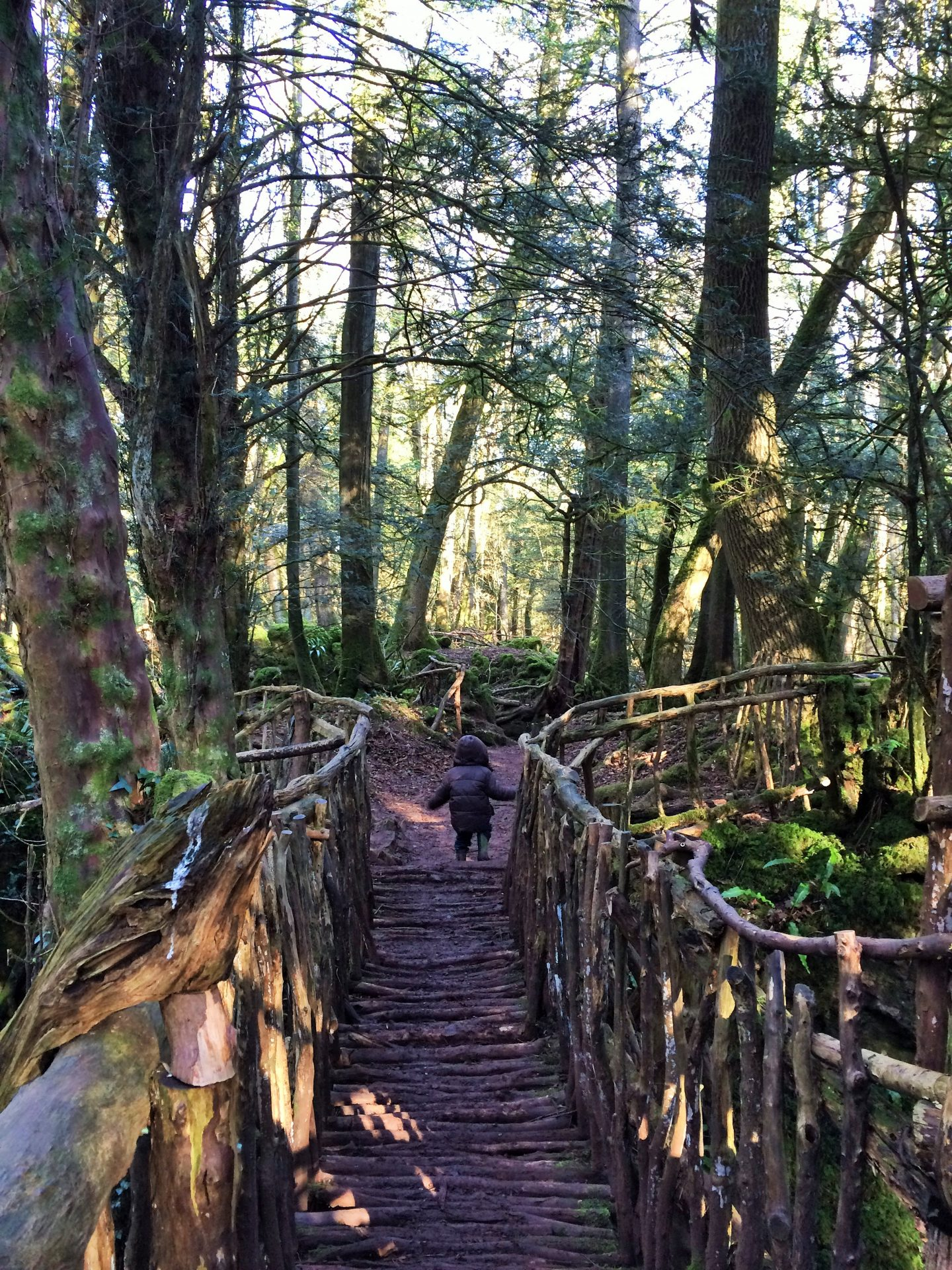 Puzzlewood, Forest of Dean, family friendly weekend away