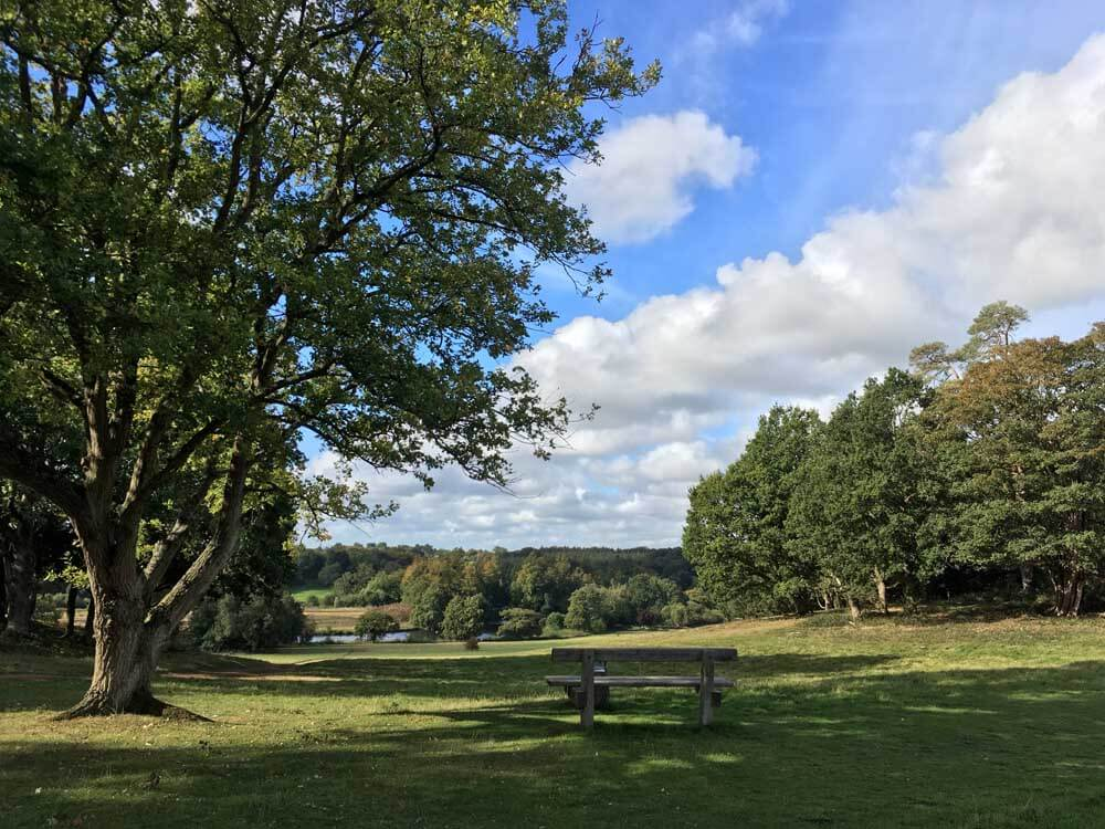 wooden bench overlooking countryside at panshanger park in hertfordshire