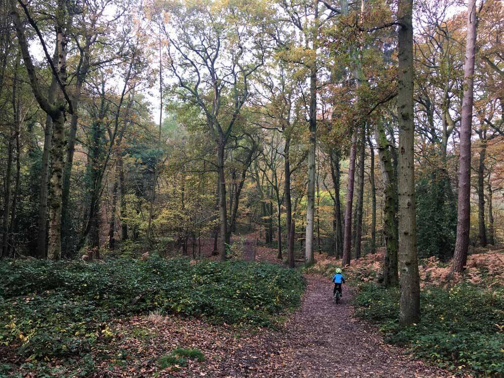 Autumn at Sherrards Park Woods in Hertfordshire