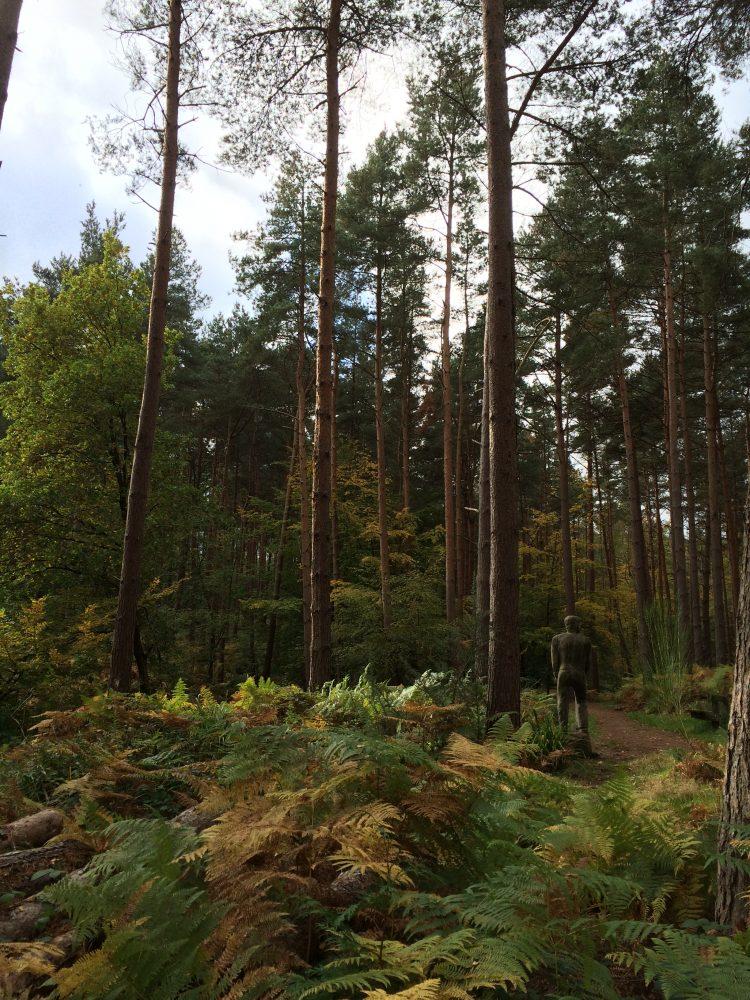 Broxbourne Woods Hertfordshire