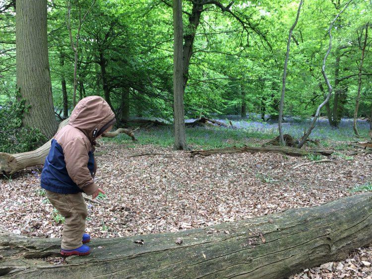 Panshanger park woods, hertford