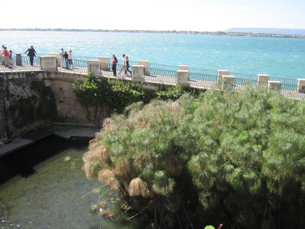 Aretusa Fountain, things to do in Syracuse sicily with kids