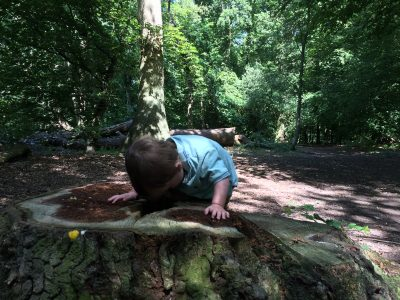 Cheap days out near Hertford: Panshanger woods