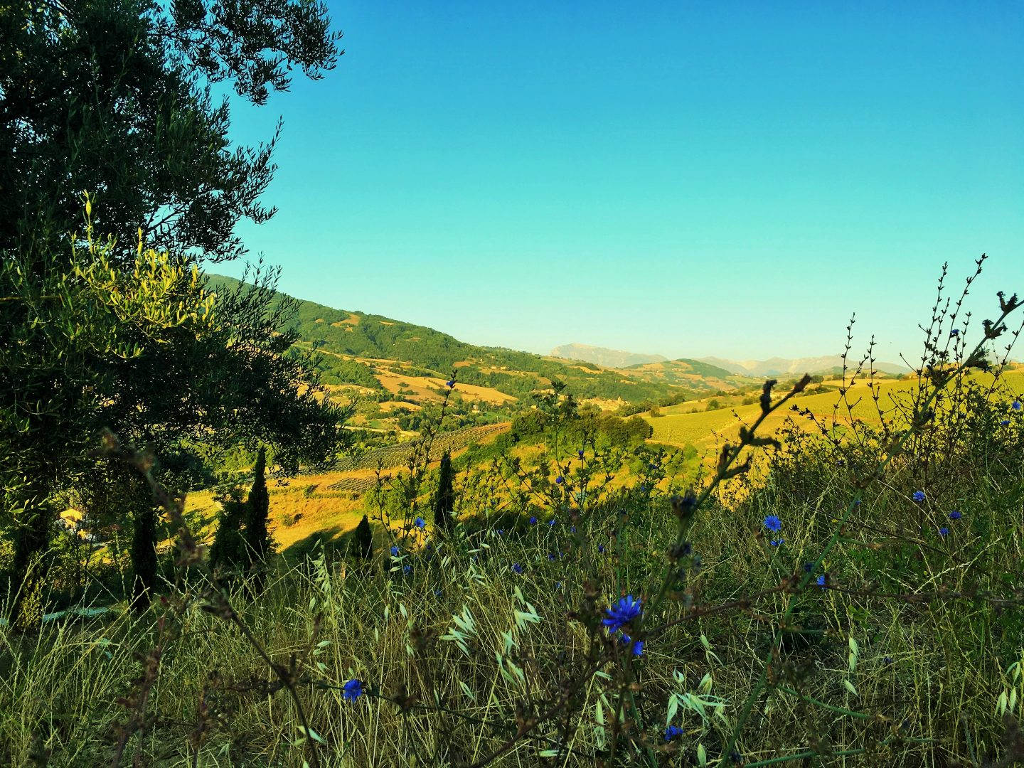 10 reasons to take a family holiday in Le Marche Italy
