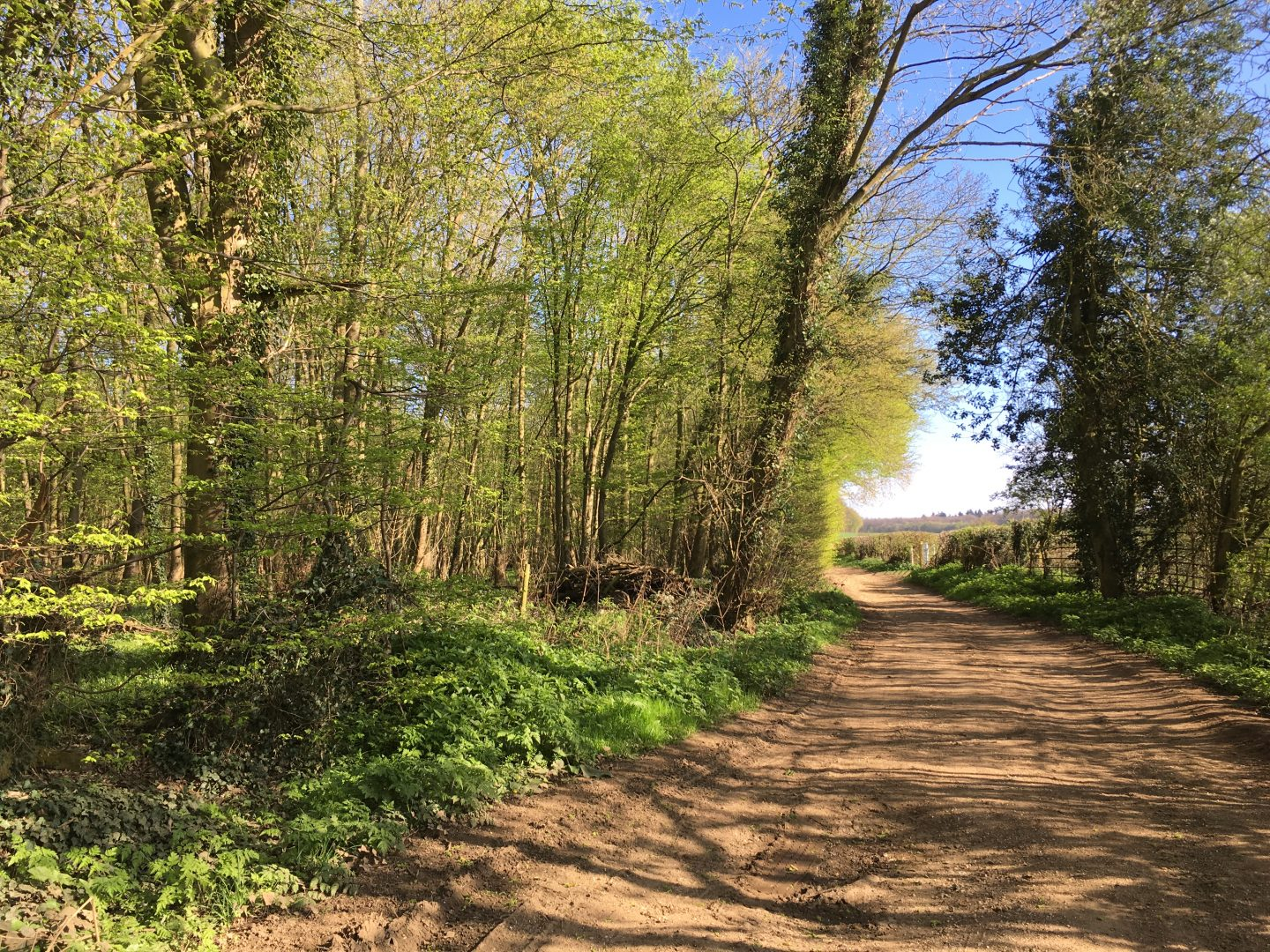 Walks in Herts with kids: Watton at Stone circular walk