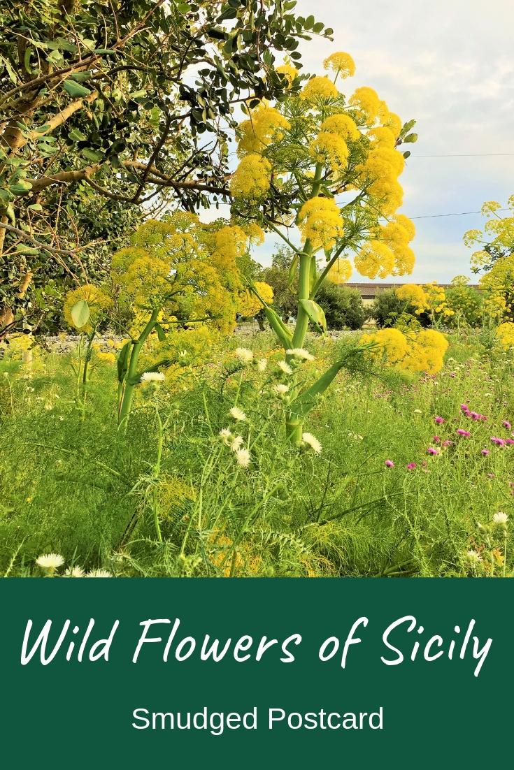 Wild flowers of Sicily