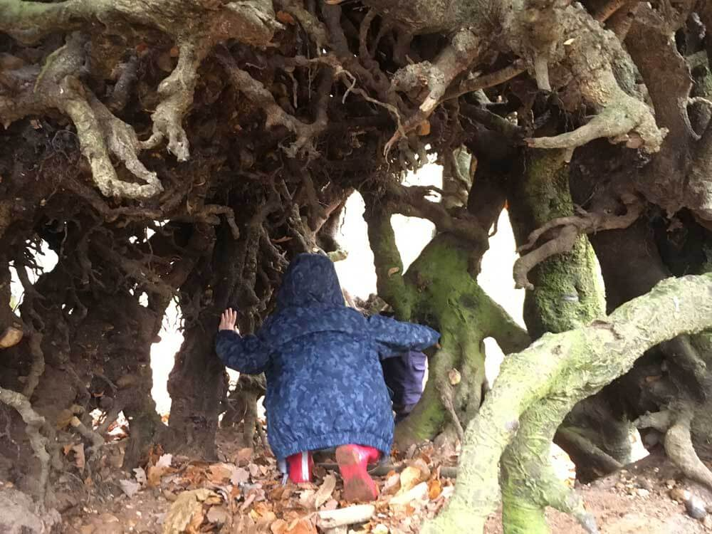 child exploring tree roots
