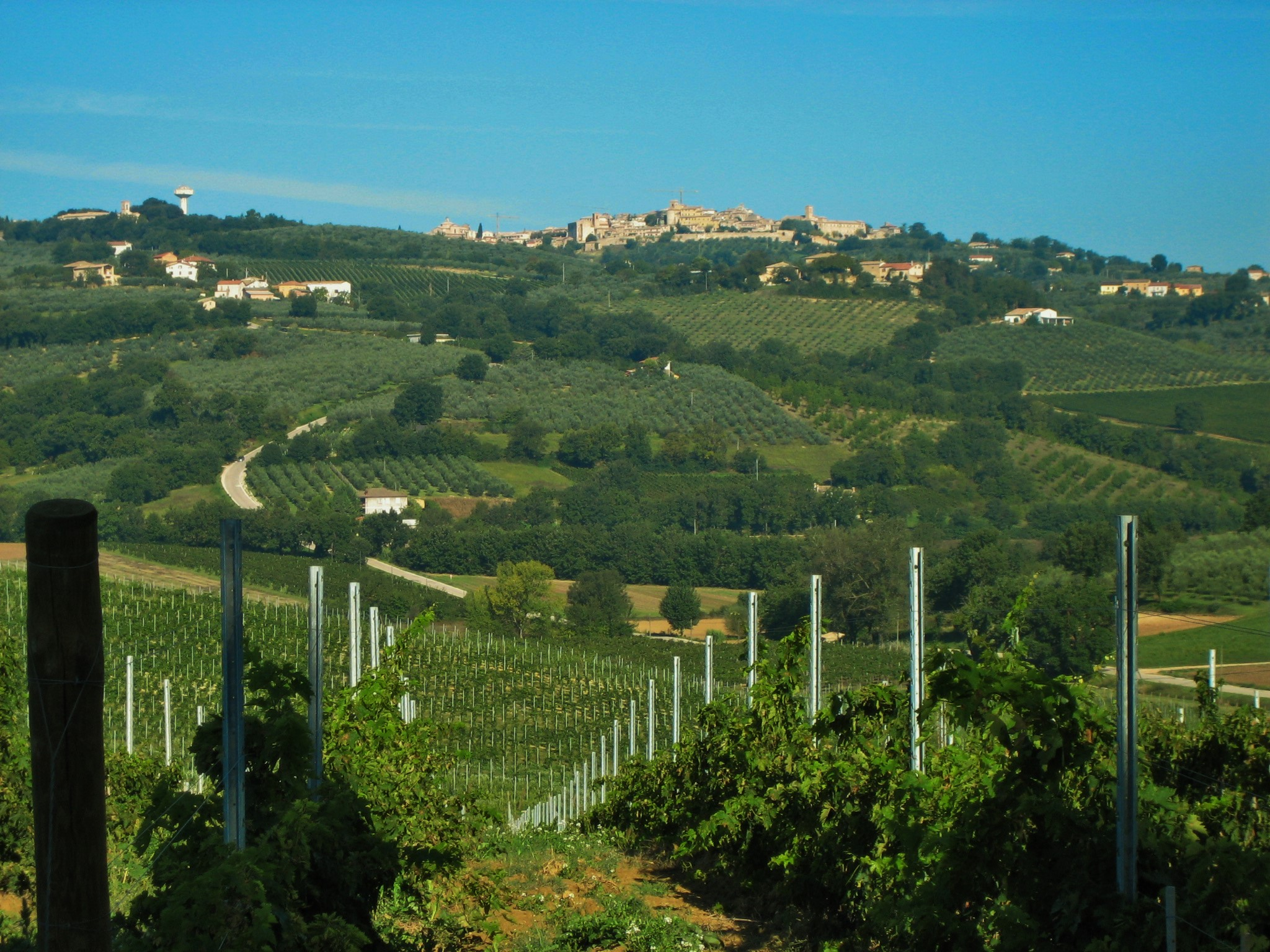 Looking over vineyards towards Montefalco.JPG