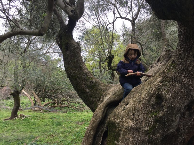 exploring Milia's olive groves