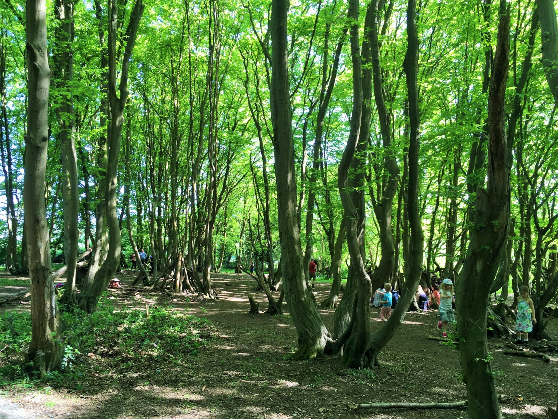 Langley Woods