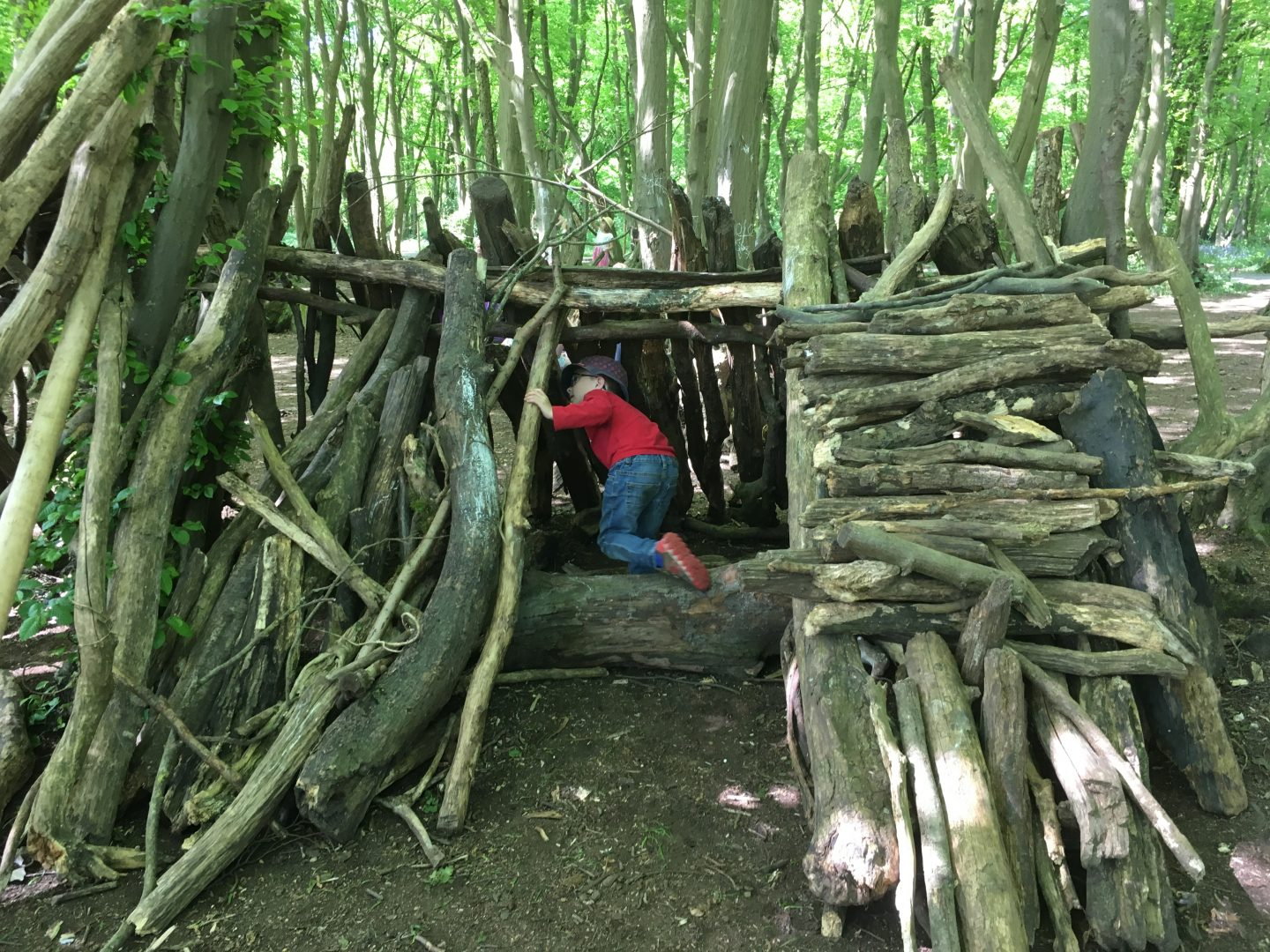 dens at Heartwood Forest, autumn walks in Hertfordshire