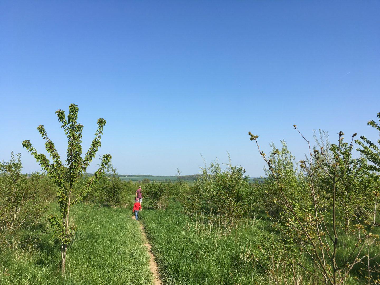 Heartwood pathways