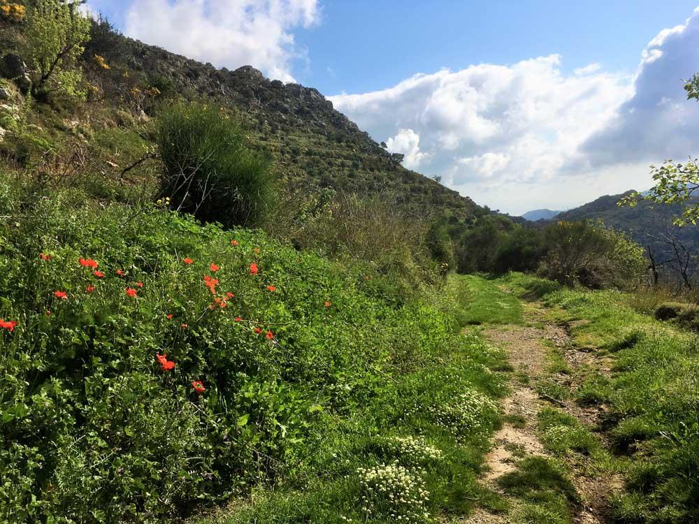 hillside pathway with wild flowers in Crete