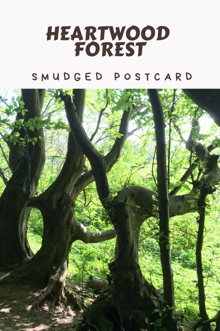 heartwood forest walk smudged postcard
