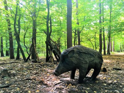 Wild boar at Broxbourne Woods Sculpture Trail