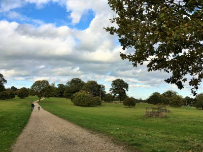 Open parkland at Blickling Estate