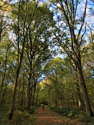 Woodland trails at Blickling Estate