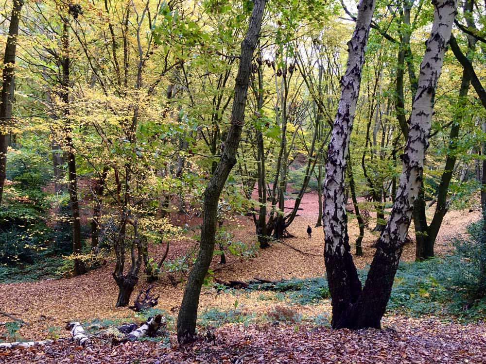 Hertfordshire woodland in autumn