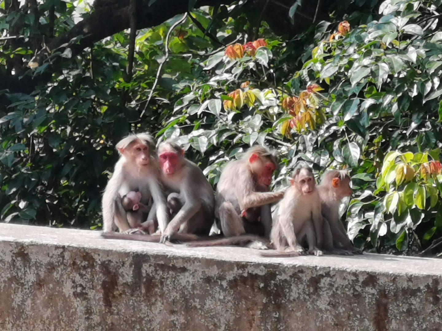 Monkeys on the road to Munnar, Kerala India
