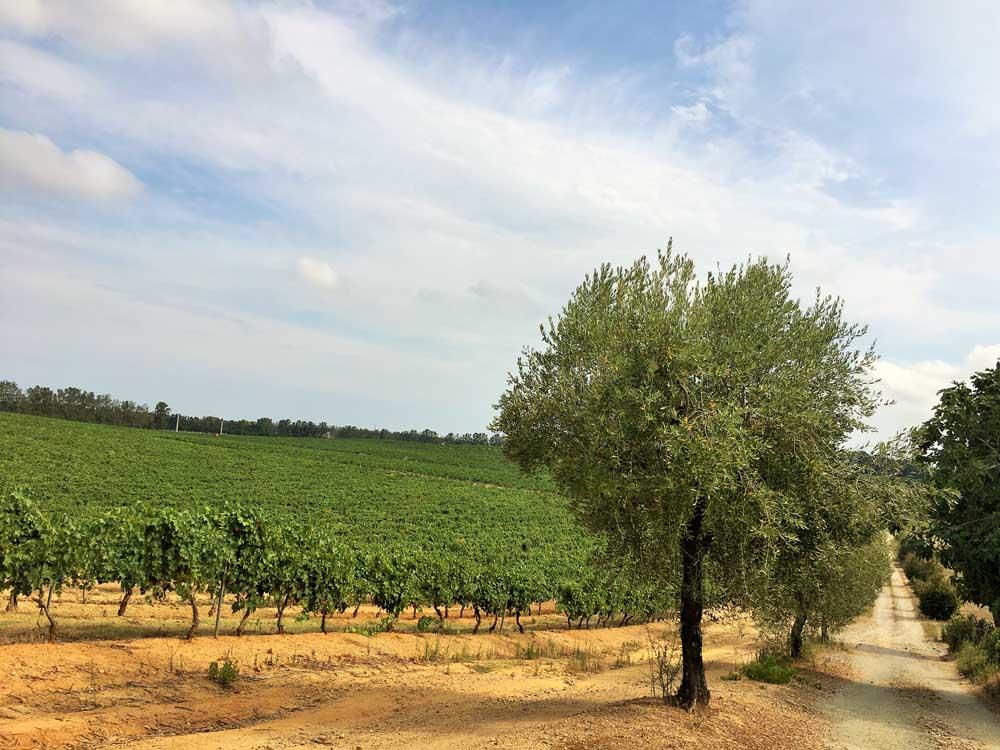 Farmland in Corsica