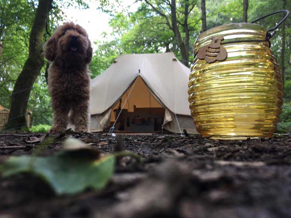 dog in front of glamping tent in peak district
