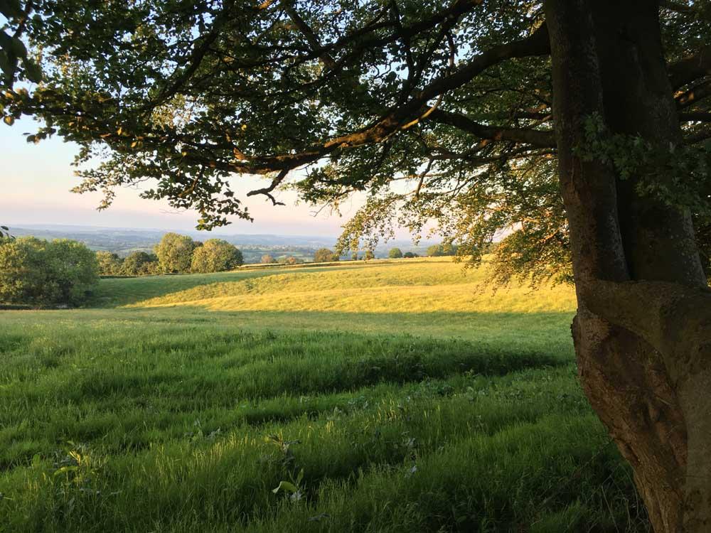farm fields with tree