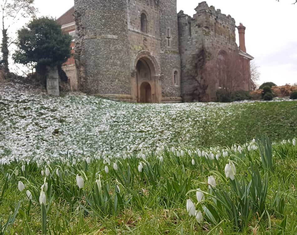 Ruined castle with snowdrops in Hertfordshire