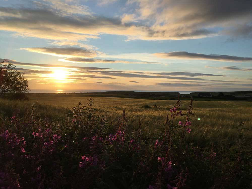 Sunset view with wild flowers