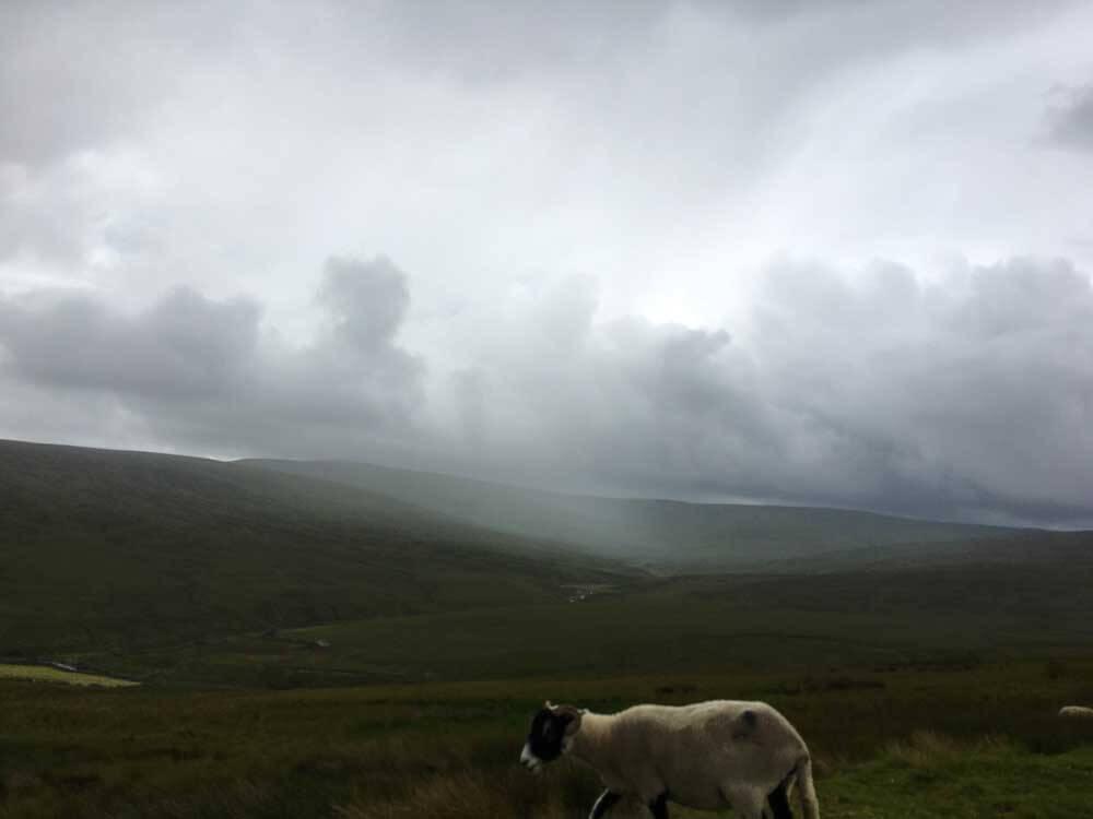 sheep on road on rainy hillside, UK road trip