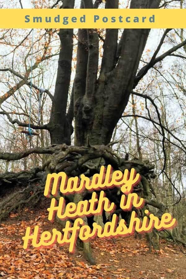 Mardley Heath walks with kids in Hertfordshire