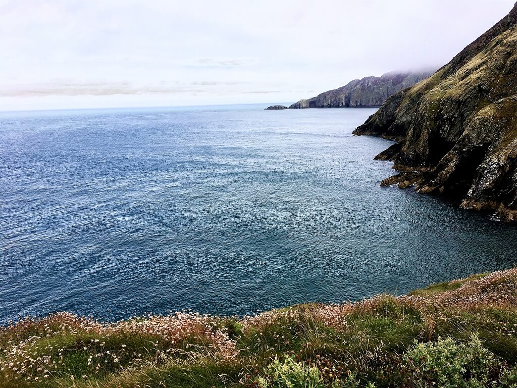 Coastline with wild flowers in the foreground